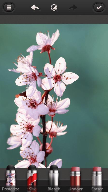 Une photo de fleur sans retouche
