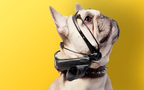 Photo de [TOP] Les meilleurs colliers connectés pour chien et chat