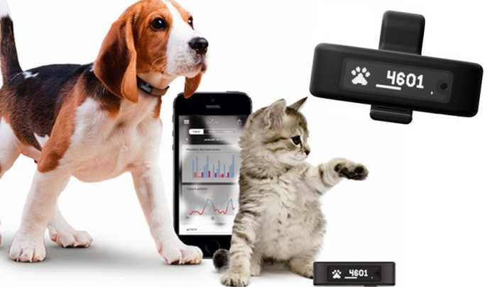 pet-wearables-tractive-motion1