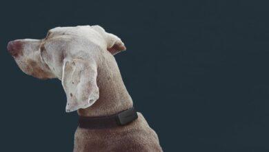 Photo of Invoxia Pet Tracker : Solution pour suivre un animal de compagnie à la trace