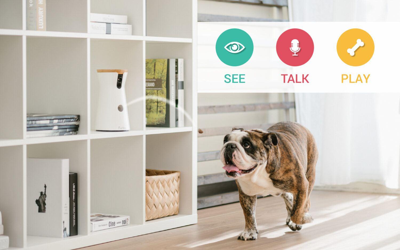 Bon Plan Furbo - Caméra pour chien