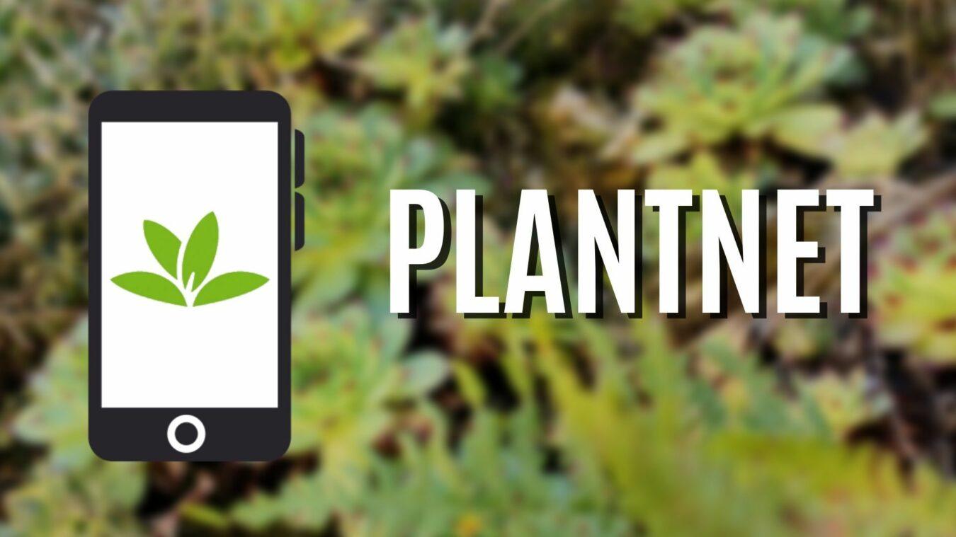 Photo de Plantnet: L'application pour découvrir les fleurs et les plantes qui vous entourent