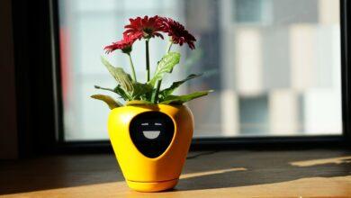 Photo of Lua : le pot animé qui traque la santé de votre plante