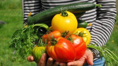Photo de Faites pousser des légumes dans votre cuisine pendant le confinement