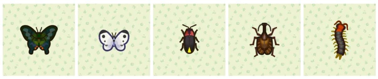 animal-crossing-papilio-bianor-piéride-de-la-rave-luciole-mille-pattes-mormolyce