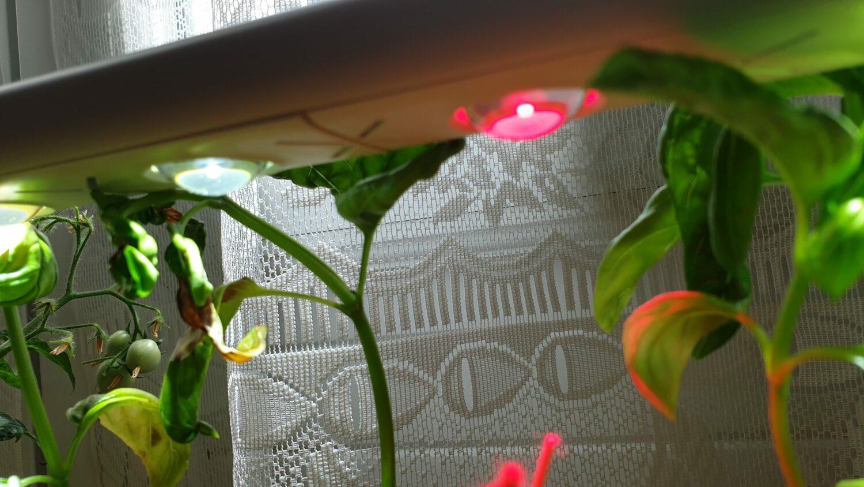Lumière du Smart Garden 9