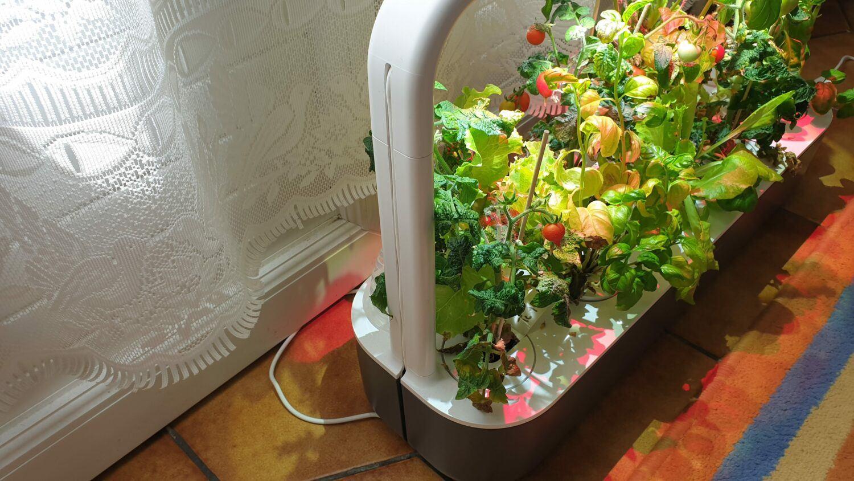 Côté gauche Smart Garden 9