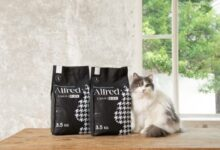litiere pour chat Alfred marc cafe
